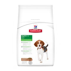 Kuivtoit koertele Hill's Science Plan Puppy Healthy Development Lamb & Rice, 12 kg