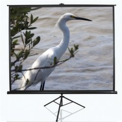 Elite Screens T120NWV1 (243 x 182 cm) цена и информация | Экраны для проекторов | kaup24.ee
