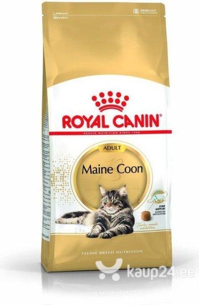 Royal Canin Meini tõugu kassidele, 10 kg