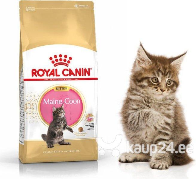 Royal Canin Meini tõugu kassipojad, 2 kg