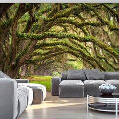 Fototapeet - Tree embrace hind ja info | Seinakattematerjalid | kaup24.ee