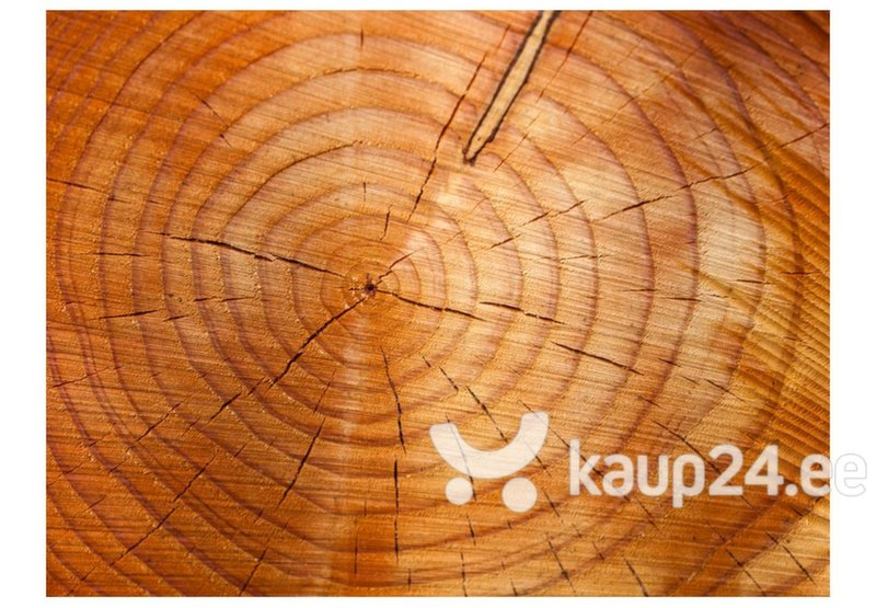 Fototapeet - Annual rings on a tree trunk