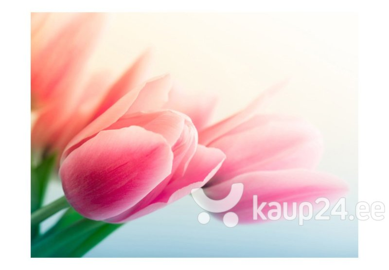 Fototapeet - Spring and tulips