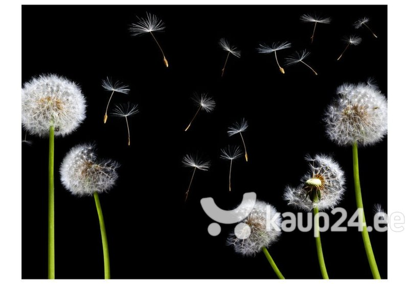 Fototapeet - Dandelions in the wind