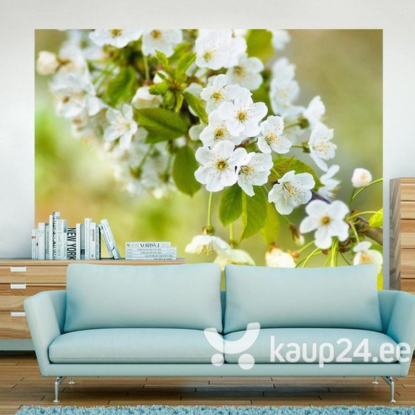 Fototapeet - Beautiful delicate cherry blossoms