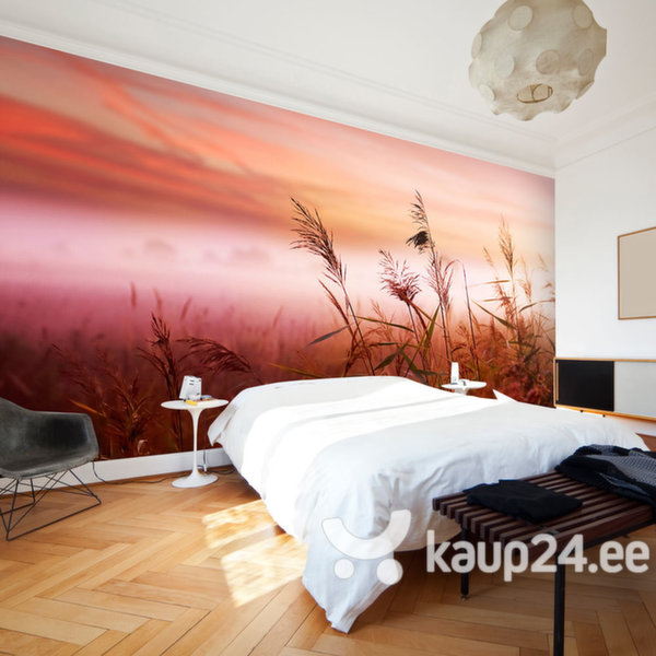 Fototapeet - Morning meadow
