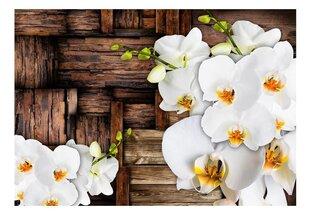 Фотообои - Цветущая орхидея