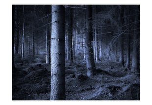 Fototapeet Keelatud mets