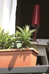 Lillekast TERRA TERRACOTTA, 70x30x27,7 cm