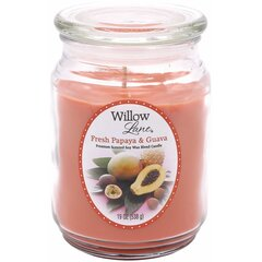 Candle-lite lõhnaküünal Willow Lane Fresh Papaya & Guava