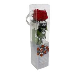Stabiliseeritud mini pojengroos Amorosa Punane hind ja info | Uinuvad roosid | kaup24.ee