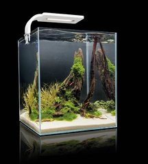 Akvaarium SHRIMP SET SMART 10 White, valge