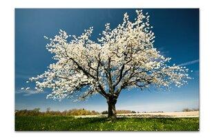 Maal, õitsev puu