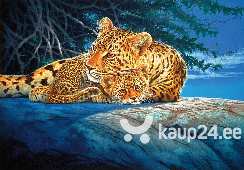 Pusle Step Puzzle 560 Leopardid hind