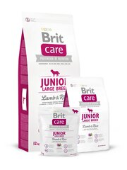 Brit Care Junior Large Breed Lamb & Rice 3 kg hind ja info | Brit Care Junior Large Breed Lamb & Rice 3 kg | kaup24.ee